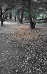 2009 09 22 127 bw treespath